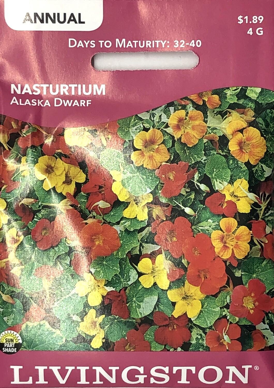 NASTURTIUM - ALASKA DWARF