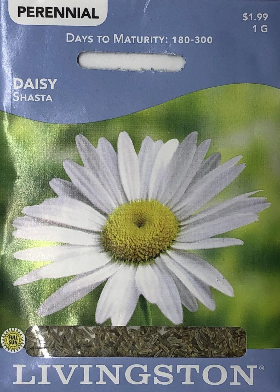 DAISY - SHASTA