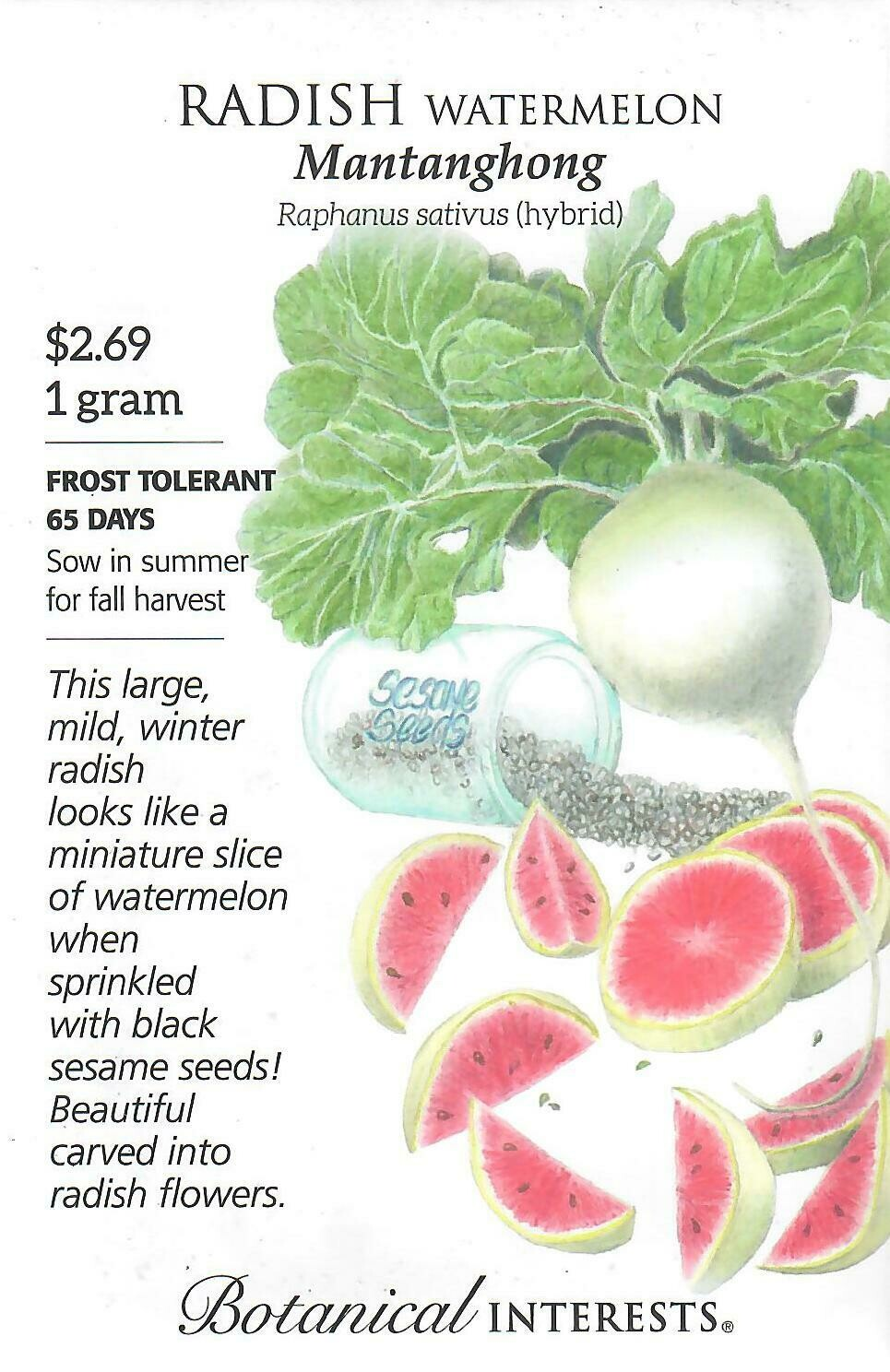Radish Watermelon hybrid Botanical Interests