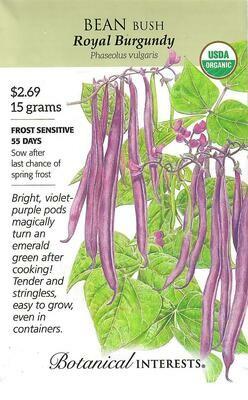 Bean Bush Royal Burgundy Org Botanical Interests