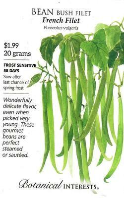 Bean Bush French Filet Botanical Interests
