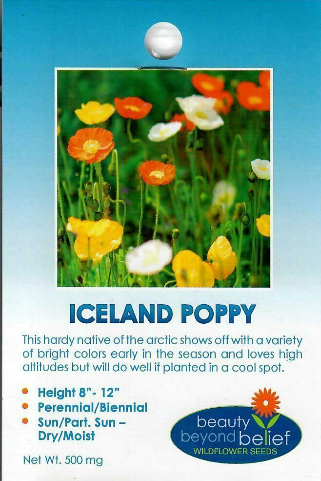 Poppy - Iceland WF