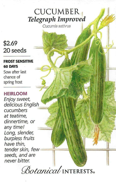 Cucumber English Telegraph Botanical Interests