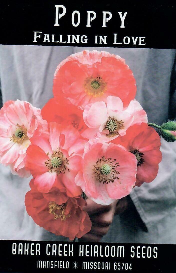 Poppy - Falling in Love BC
