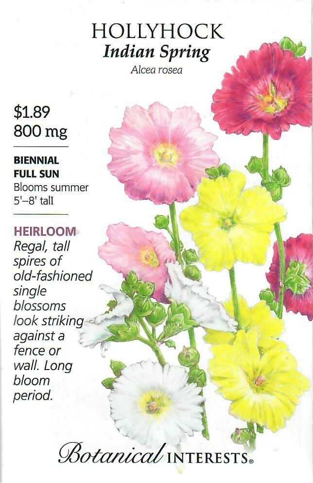 Hollyhock Indian Spring Botanical Interests