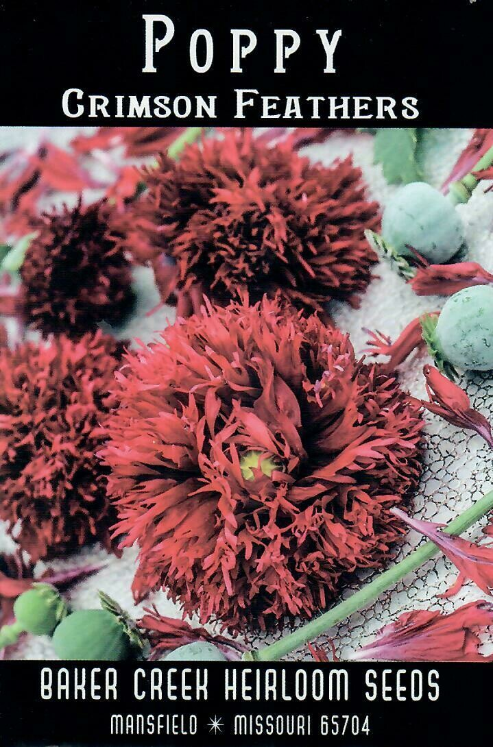 Poppy - Crimson Feathers BC