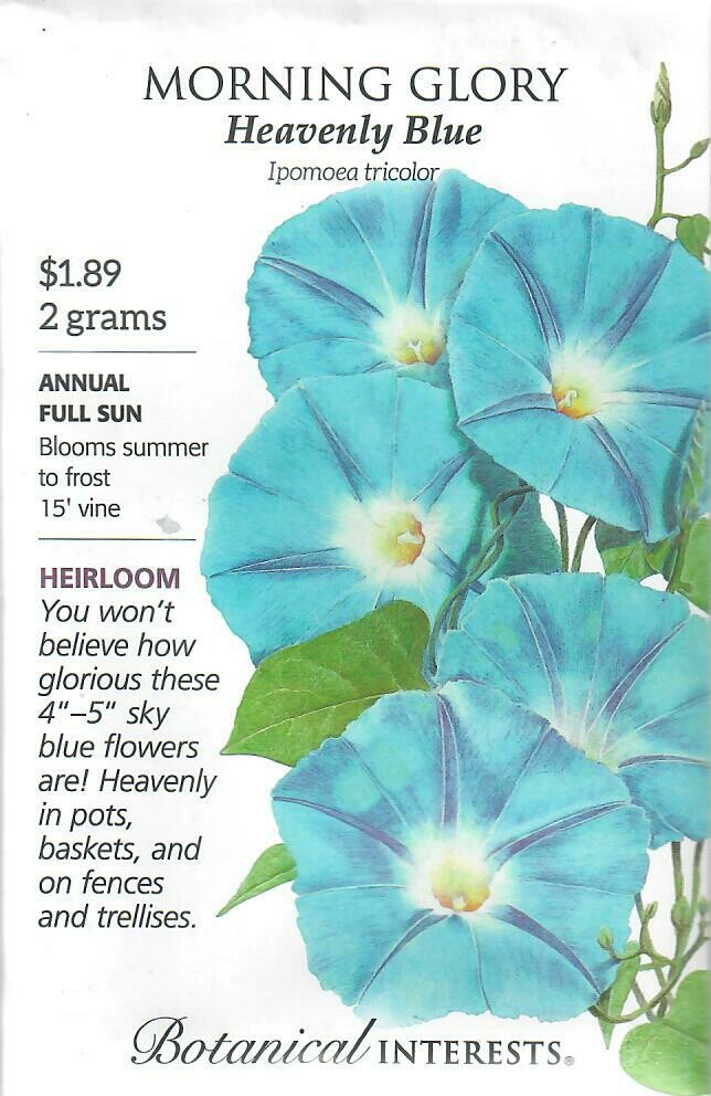 Morning Glory Heavenly Blue Botanical Interests