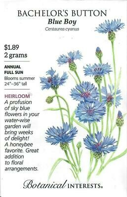 Bachelor Button Blue Boy Botanical Interests