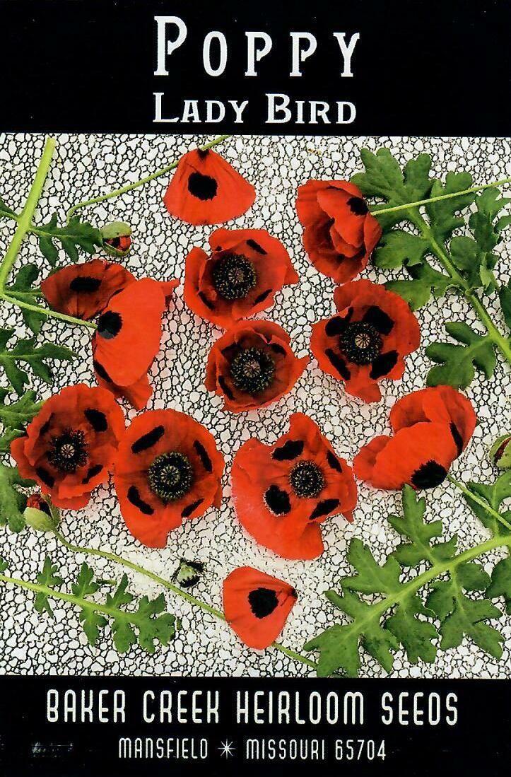 Poppy - Ladybird BC