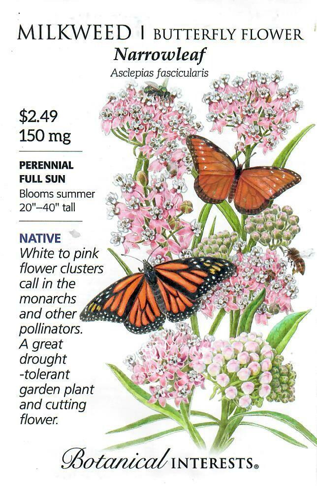 Milkweed Narrowleaf Botanical Interests