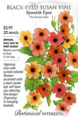 Black-Eyed Susan Vn Spanish Eyes Botanical Interests