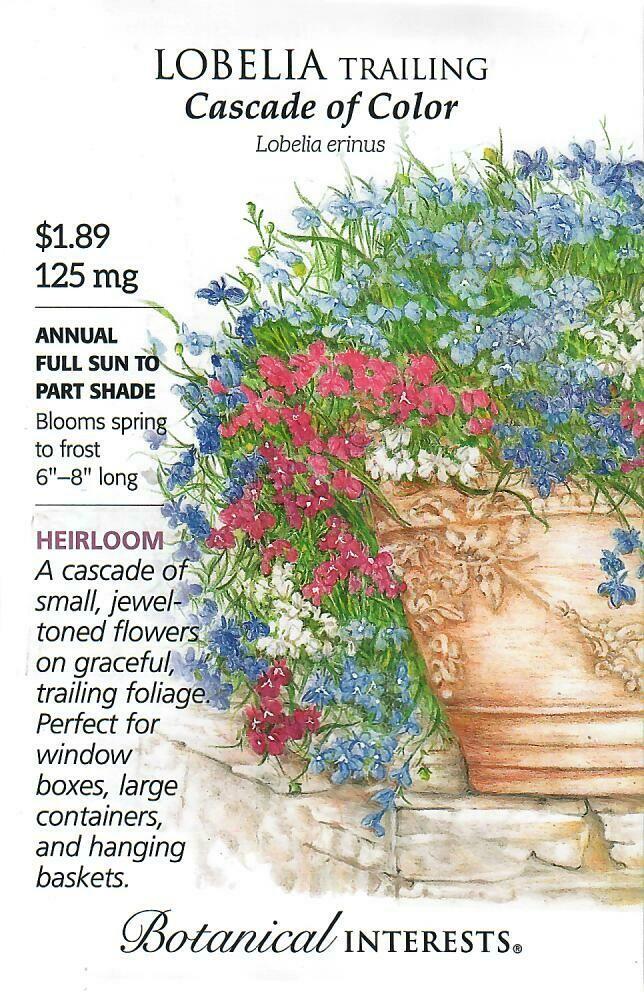 Lobelia Trailing Cascade of Color Botanical Interests