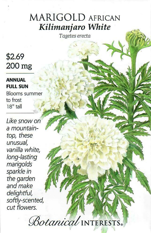 Marigold African Kilimanjaro White Botanical Interests