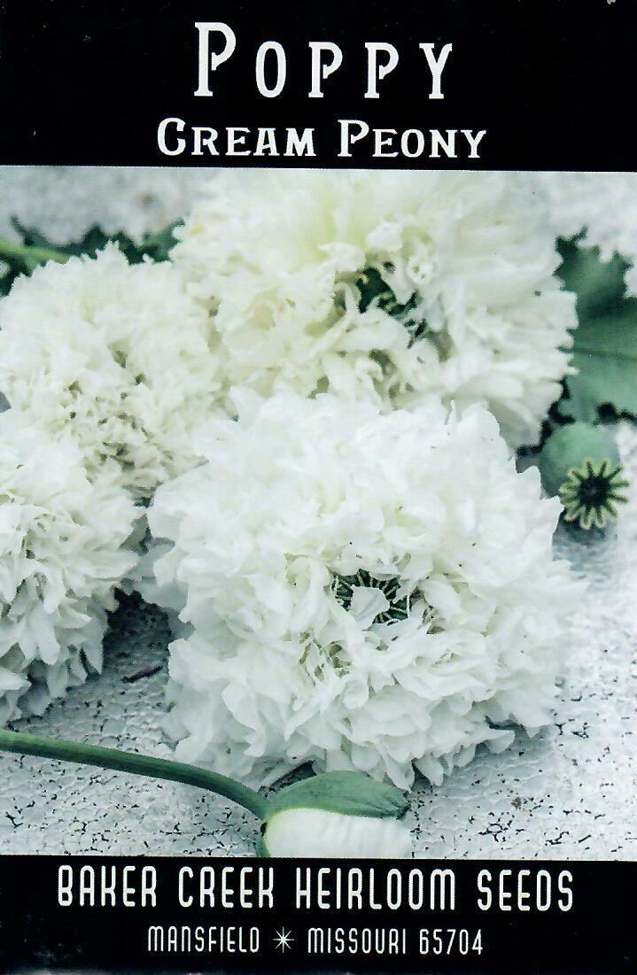 Poppy - Cream Peony BC
