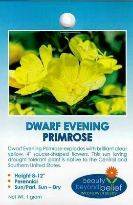 Evening Primrose WF