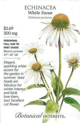 Echinacea White Swan Botanical Interests