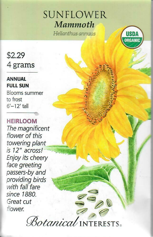 Sunflower Mammoth Org Botanical Interests