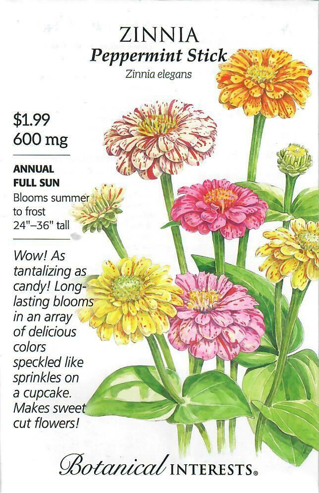 Zinnia Peppermint Stick Botanical Interests