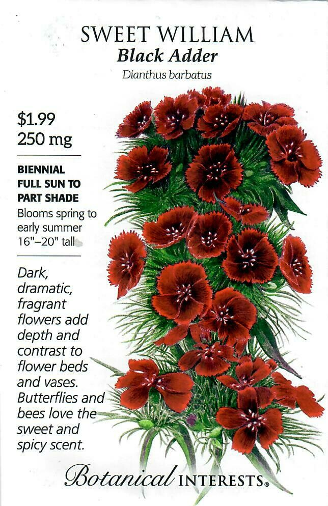 Sweet William Black Adder Botanical Interests