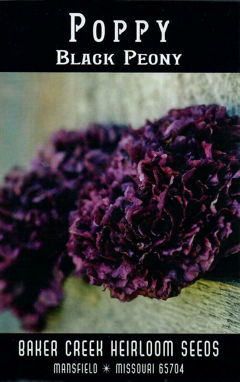 Poppy - Black Peony BC