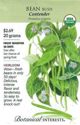 Bean Bush (green) Contender Org Botanical Interests