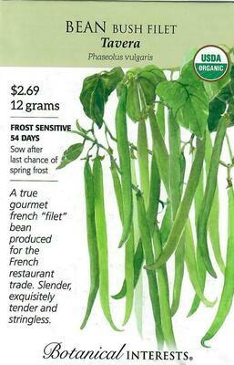 Bean Bush French Tavera Org Botanical Interests