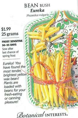 Bean Bush (yellow) Eureka Botanical Interests
