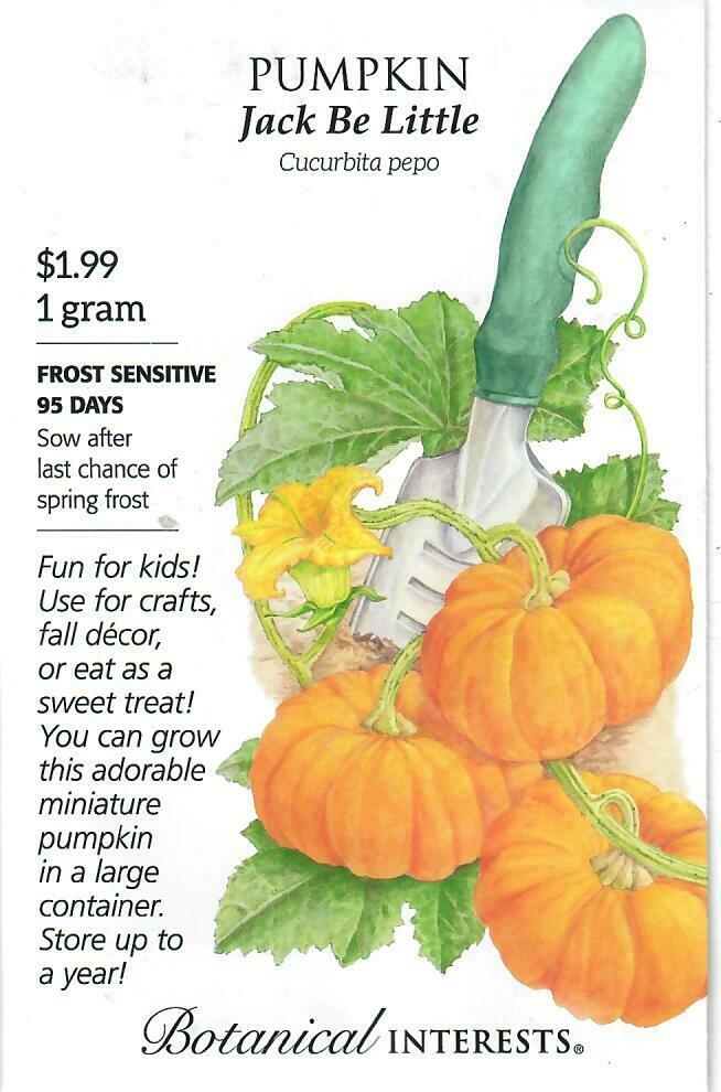 Pumpkin Jack Be Little Botanical Interests