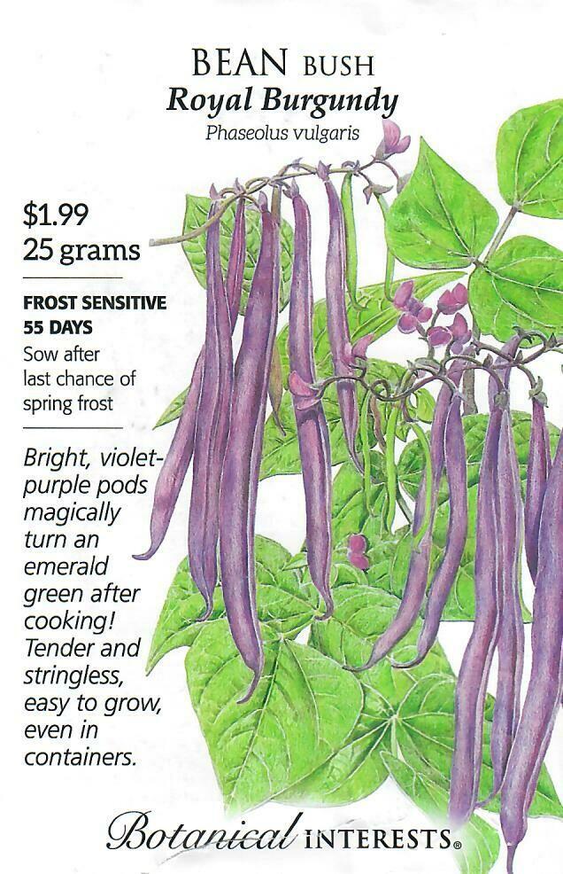 Bean Bush Royal Burgundy Botanical Interests