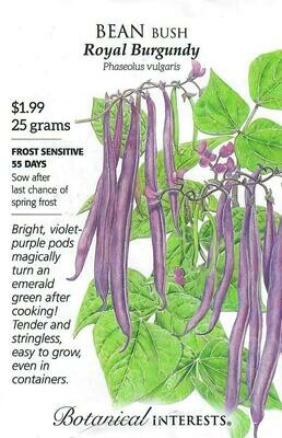 Bean Bush Royal Burgundy Botanical Interests