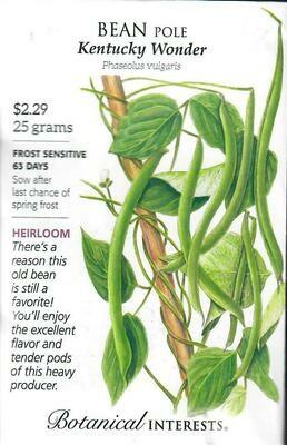 Bean Pole Kentucky Wonder Botanical Interests