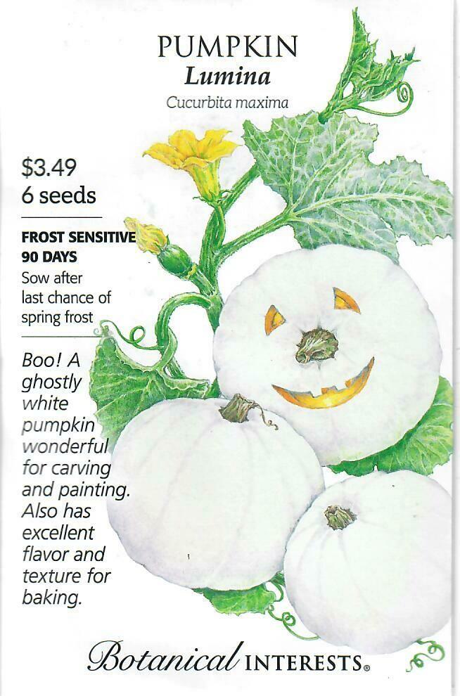 Pumpkin Lumina (white) Botanical Interests