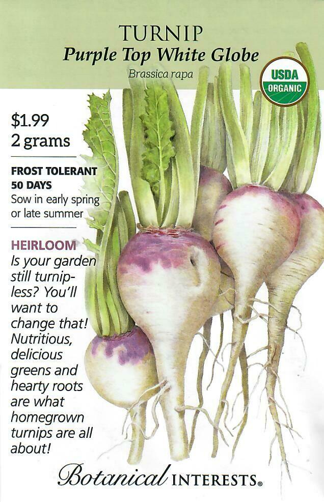 Turnip Purple Top White Globe Org Botanical Interests