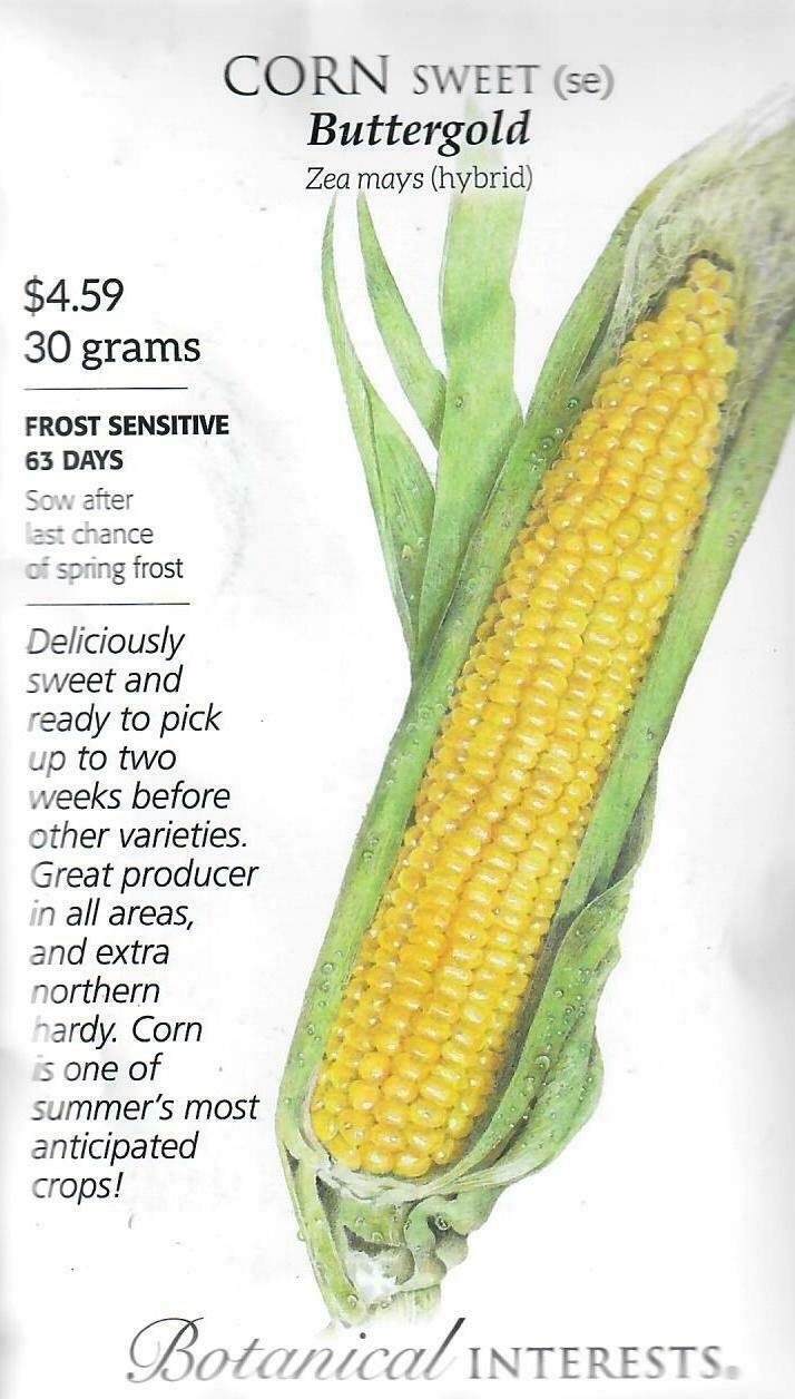 Corn Swt (yellow) Buttergold LG Packet Botanical Interests