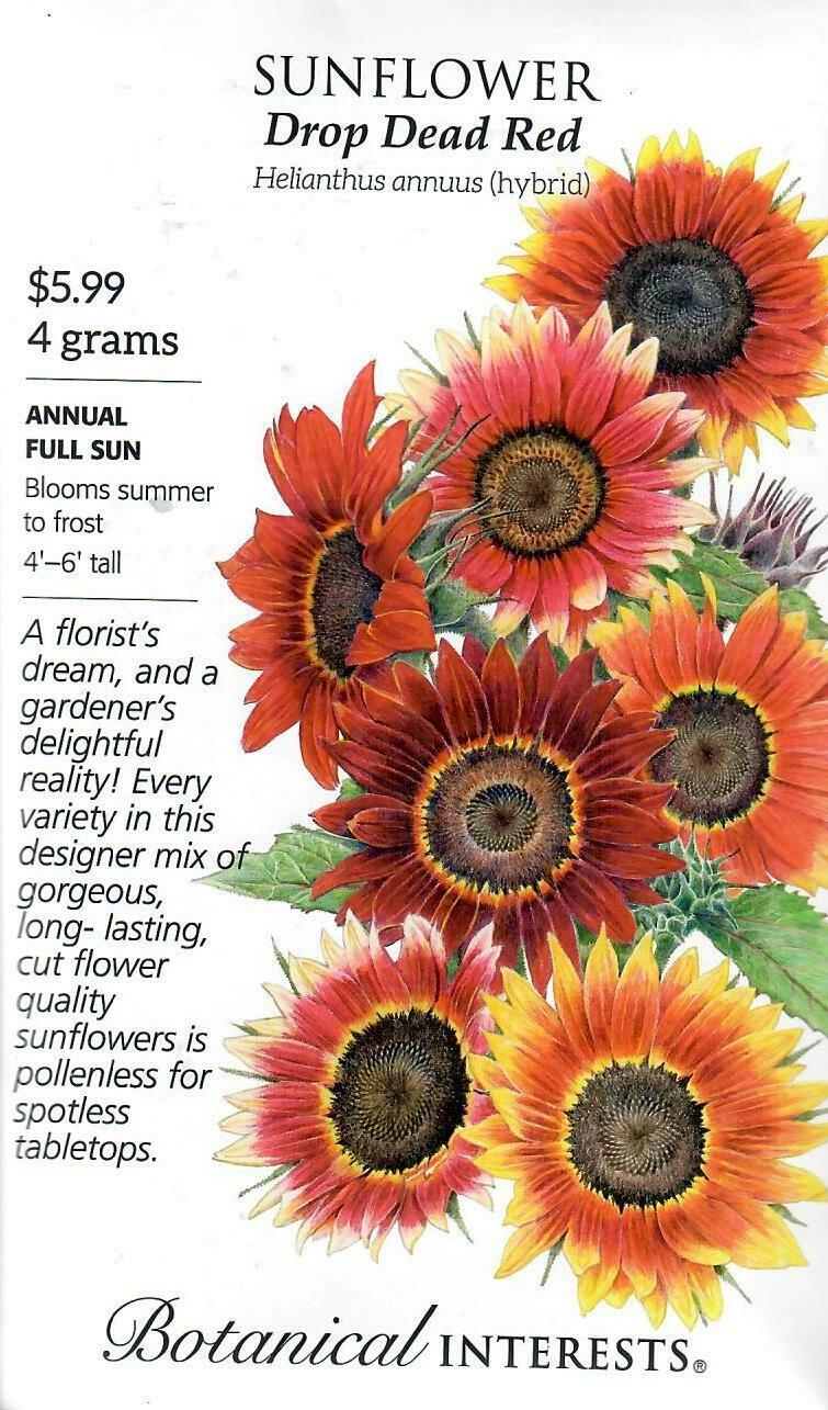 Sunflower Drop Dead Red hybrid LG Packet Botanical Interests