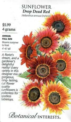 Sunflower Drop Dead Red hybrid LG Packet Botanical Interests