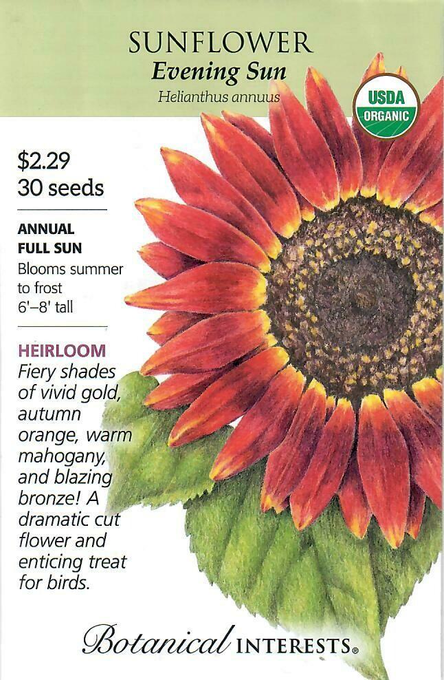 Sunflower Evening Sun Org Botanical Interests