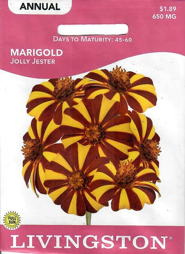 MARIGOLD - JOLLY JESTER