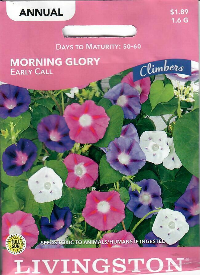 MORNING GLORY - EARLY CALL