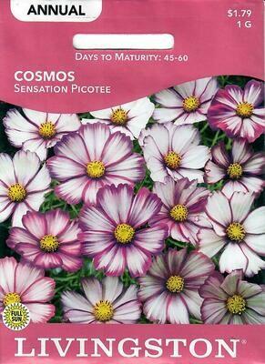 COSMOS - SENSATION PICOTEE