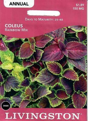 COLEUS - RAINBOW MIX