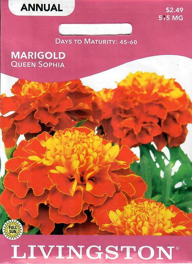 MARIGOLD - QUEEN SOPHIA