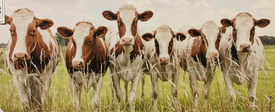 Herd OF Cows  Landscape Canvas