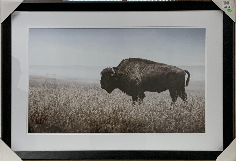 Bison in Field Framed Art Print