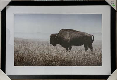 Bison in Field Framed Art Print