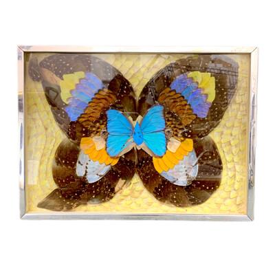 Real Butterfly Wings Wall Art