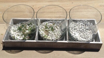 Terrarium/Vase Set & Display
