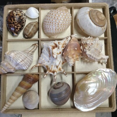 Beautiful Shell Collection