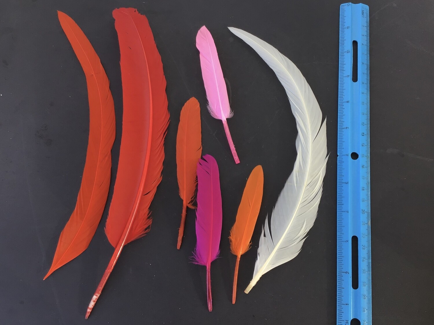 Feathers - Red, Pink, Orange, White