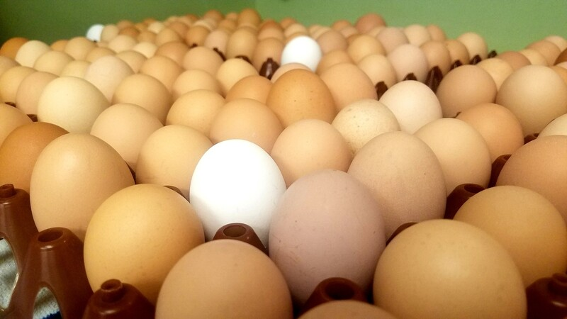 Egg Sale--10 Dozen at 20% Off!